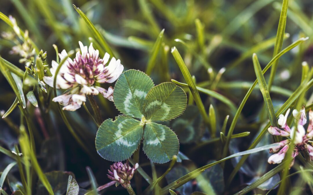 Schedule Changes: All Cloverdale Clean-Up Events