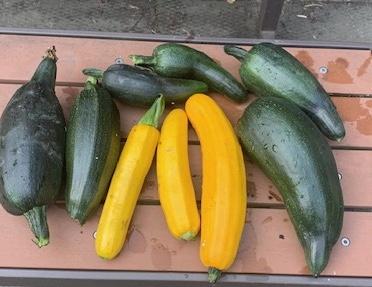 Squash veggies for the Food Bank
